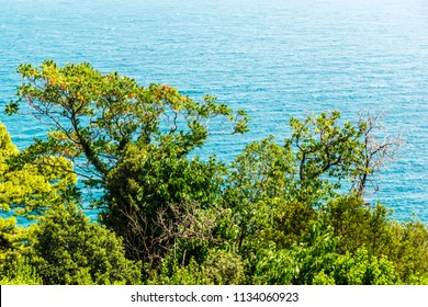 Trees against the background of the sea in Vorontsovsky Park, Alupka, Crimea