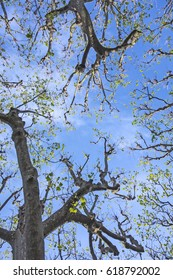 trees against blue sky in spring gives a harmonic feeling