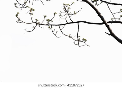 Trees Against isolated on white background