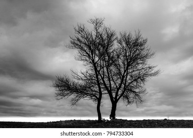 Trees against a stormy dark sky, feeling nature force