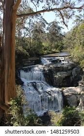 Trees at Agnes Waterfalls Australia