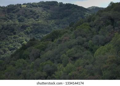 Trees in Almaden Quicksilver County Park
