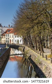Trees along the canal in Wismar, Germany