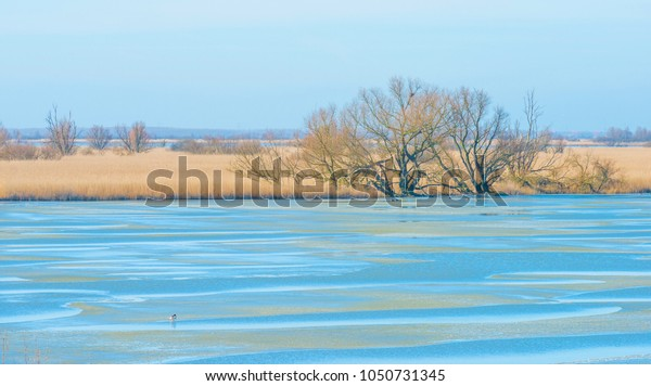 Trees along the edge of a frozen lake in sunlight in winter