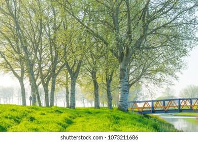 Trees along a field in sunlight in spring