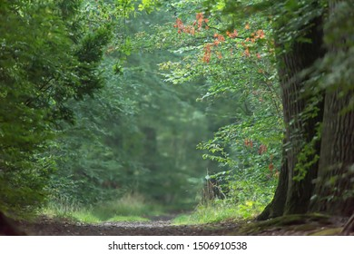 Trees along forest path in summer.