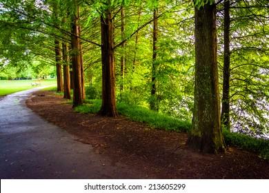 Trees along a path at Piedmont Park in Atlanta, Georgia.