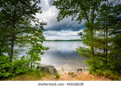 Trees along the shore of Massabesic Lake, in Auburn, New Hampshire.