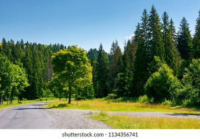 trees along the winding road through forest. lovely nature scenery in summer. travel by car concept