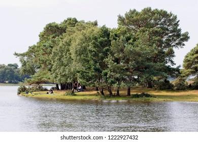 Trees alongside Hatchet Pond, New Forest National Park, Hampshire, England, UK.