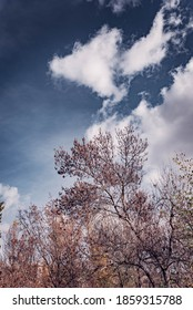 Árboles entre nubes. Paisaje otoño.