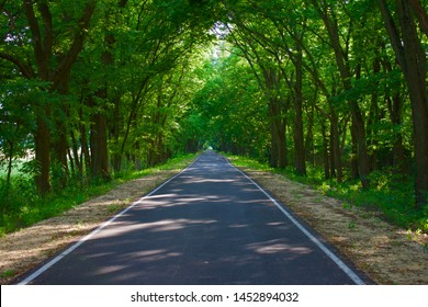 Trees arching over road with converging lines at the horizon of a long path through the woods. Green branches hanging over roadway in the woods on a long, straight, road with no center line. Scenic