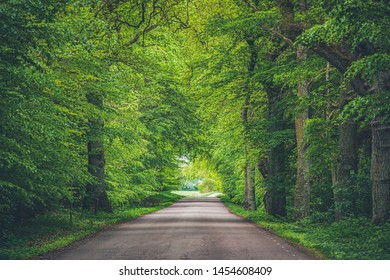 Trees arching over road with converging lines at the horizon of a long path through the woods. Green branches hanging over roadway in the woods create a natural tunnel through the forest. Straight