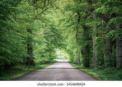 Trees arching over road with converging lines at the horizon of a long path through the woods. Green branches hanging over roadway in the woods create a natural tunnel through the forest. Toned