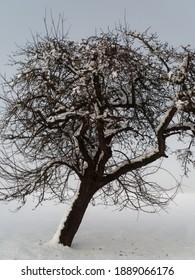 Bäume in der österreichischen Winterlandschaft
