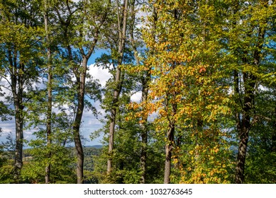 Trees at autumn