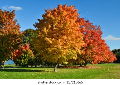 Trees in autumn with all colors of red orange and yellow leaves