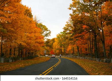 trees in Autumn along the road