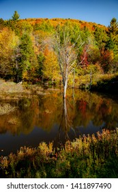 trees with autumn colors reflected in a small pond near Peacham, VT