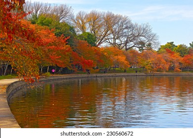 Trees in autumn foliage along Tidal Basin walkway, Washington DC. Colorful trees at peak of fall season and their reflections in Tidal Basin waters.