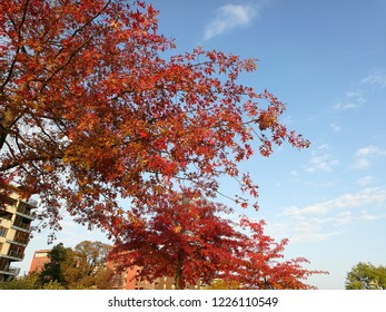 trees in autumn in Frankfurt am Main, Germany, close to ECB