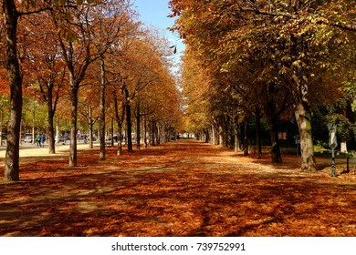 The trees of autumn in Paris, France
