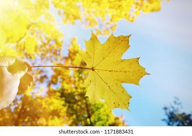 Trees in the autumn season