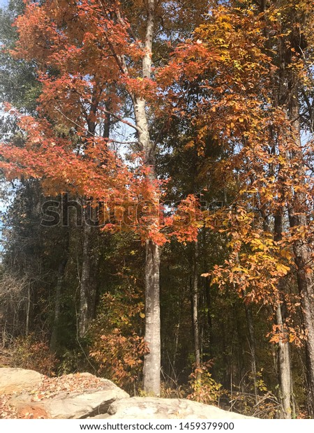 Trees in the autumn turning colors.