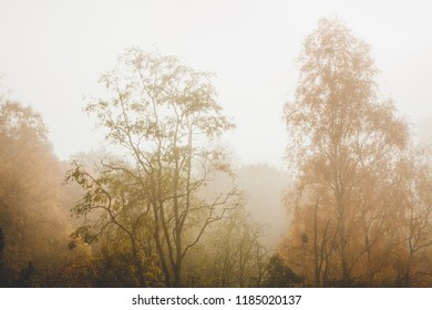 Trees at autumn yellow leaves and fog