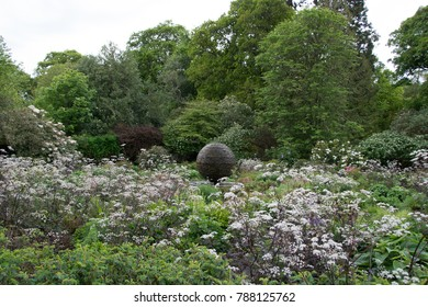 Trees in background, flowers in the foreground and a ball in the middle