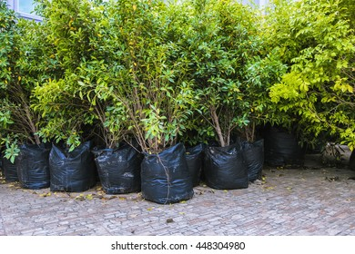 Trees in bags For moving