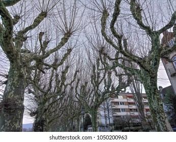 Trees in Basel Switzerland