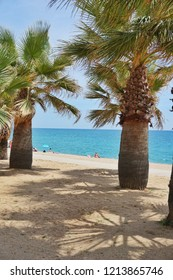 Trees at the beach