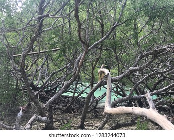 Trees in the beach, Baer Island, Kei Island, Indonesia