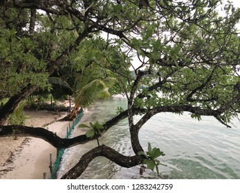 Trees in the beach, Kei Island, Indonesia