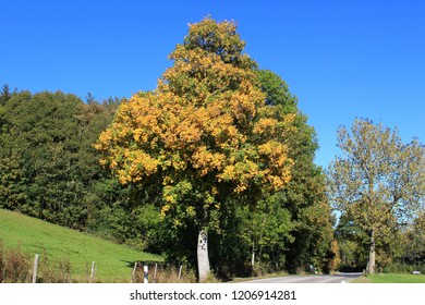 Trees with beautiful autumn foliage at a sinuous country road, blue sky above, Bavaria