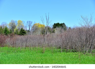 Trees beginning to but with lush green undergrowth in the foreground.