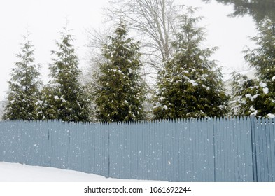 trees behind the fence with snow