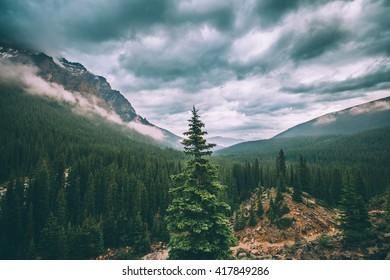 Trees behind lake Moraine, Banff