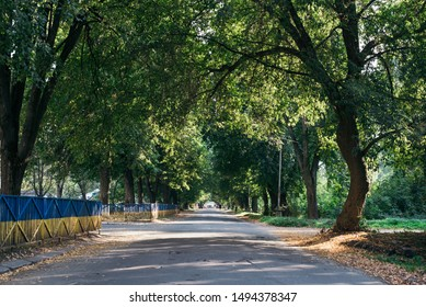 Trees bend over the road with converging lines on the horizon. Green branches hanging above the roadway in the forest create a natural tunnel through the forest. Straight, perspective