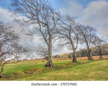 Trees bent over by the prevailing wind.