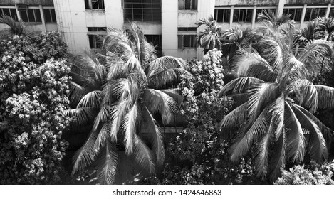 Trees beside a concrete building black and white photo
