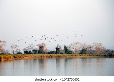 Trees and the Birds