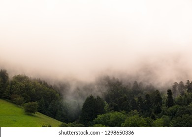Trees of Black Forest (Germany) at morning fog, big white cloud copy space background