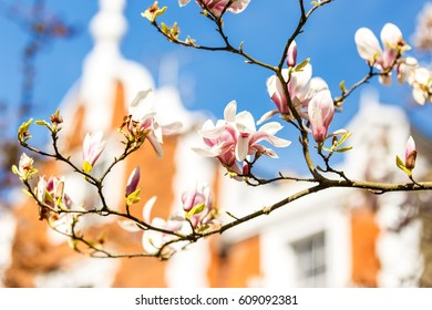 Trees in blossom in Lodon