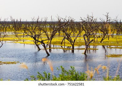 Trees in the bog