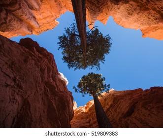 Trees at the bottom of the canyon. Bryce Canyon National Park, Utah, USA