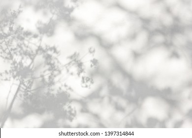 trees branch and leaf with shadow on a white concrete wall.