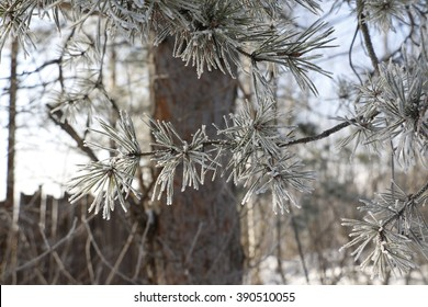 Trees and branches in a hoarfrost in a winter day