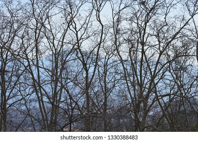 Trees branches and leaves